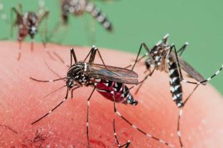 serangga berbahaya pembawa penyakit