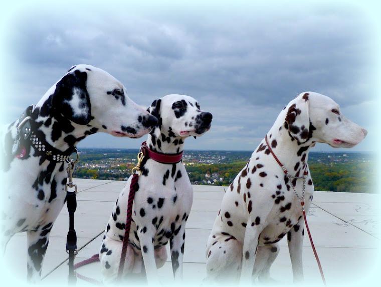 Hetty,Lexi und Giulie auf Halde Hoheward