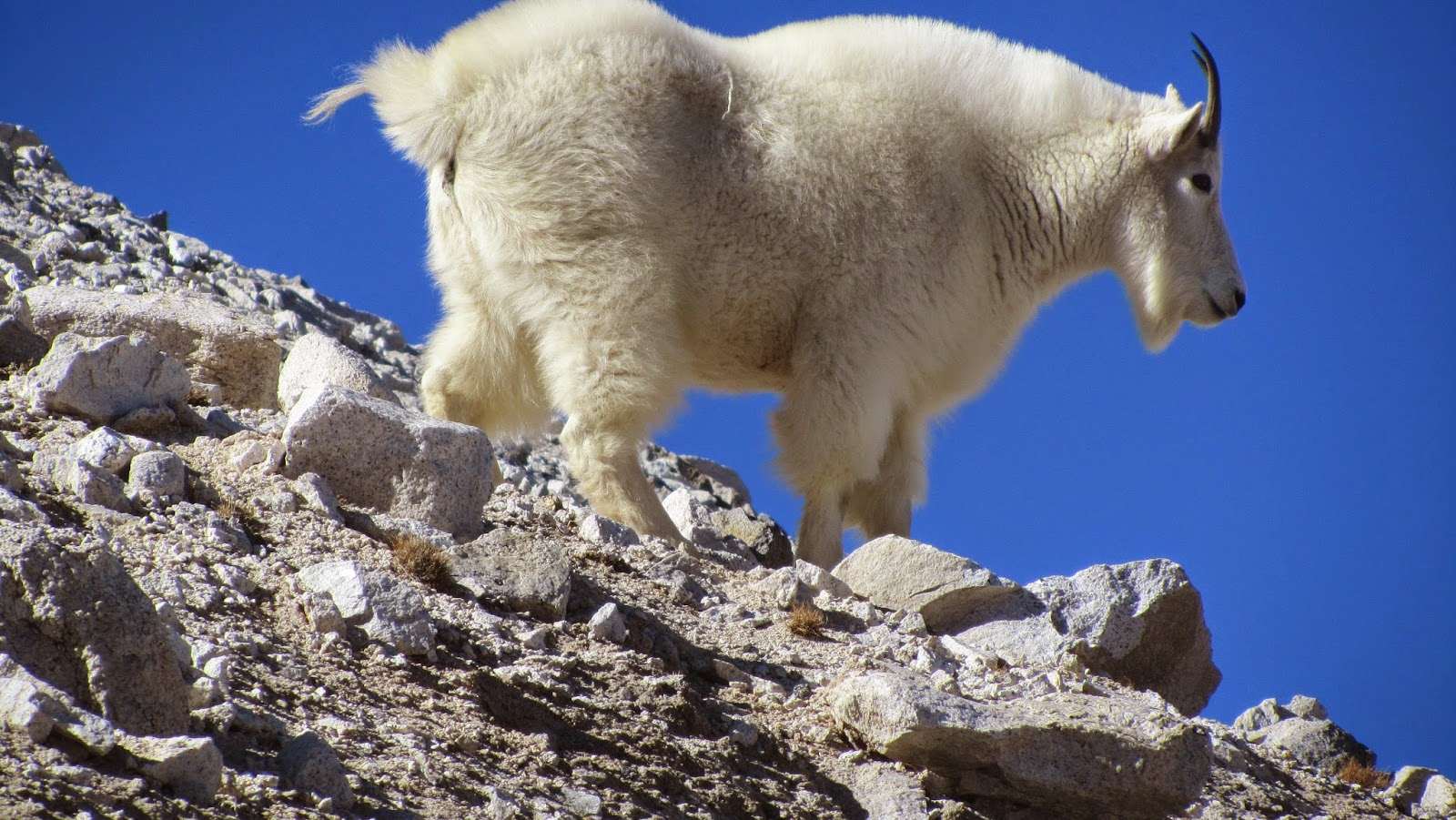 Image result for mountain goats blogspot.com