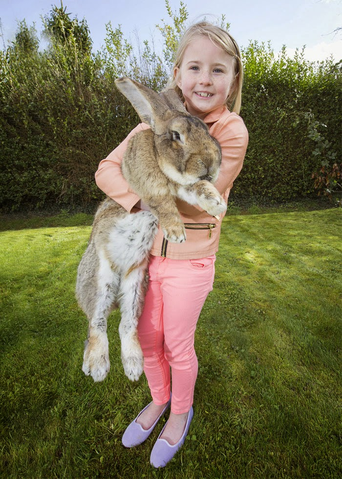 worlds biggest rabbit darius jeff-