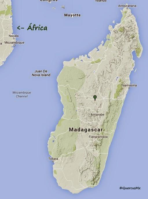 Planta originaria de Madagascar, isla ubicada al sureste de África