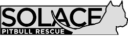 Solace Pit Bull Rescue