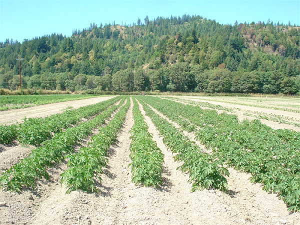 The College of the Redwoods Student Farm (My Other Life Passion)