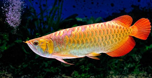 caring and feeding carnivorous fish all aquarium info