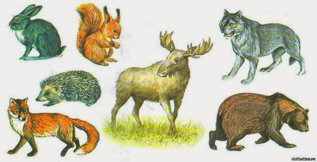 Картинки природы и животных для детей
