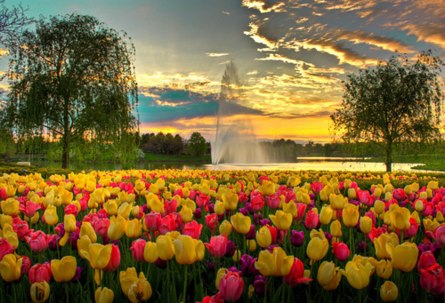 Featured Customer Of The Month Chicago Botanic Garden