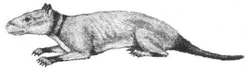 mamiferos del paleoceno Hyopsodus
