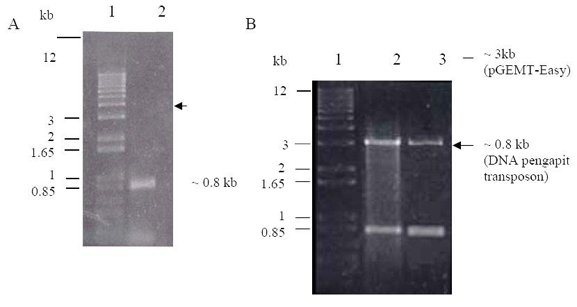 Kloning Fragmen Dna Genom Toleransi Asam Aluminium
