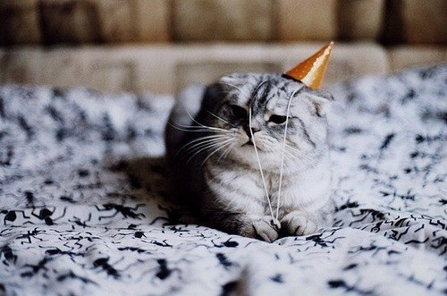 Happy Gray Cat Cat Funny Happy Birthday
