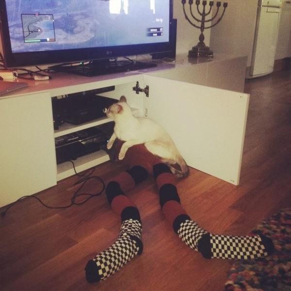 кошки с лосинами