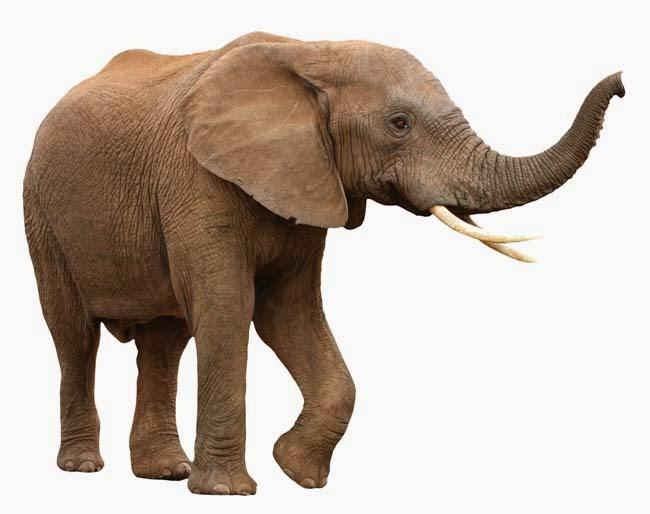 menarik tentang gajah