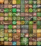 Crop Circles 2011 - La alineación cósmica del 2012