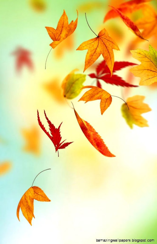 Fall Wallpaper Backgrounds iPhone   WallpaperSafari