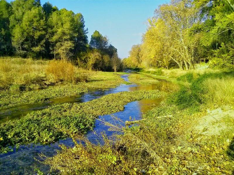 El riu Gaià a l'albereda de Santes Creus