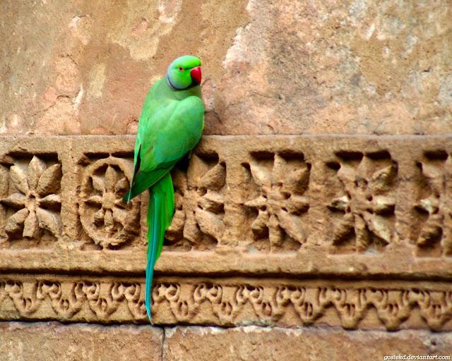 Green Parrot Wallpapers HD