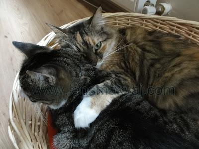 Kedilerim