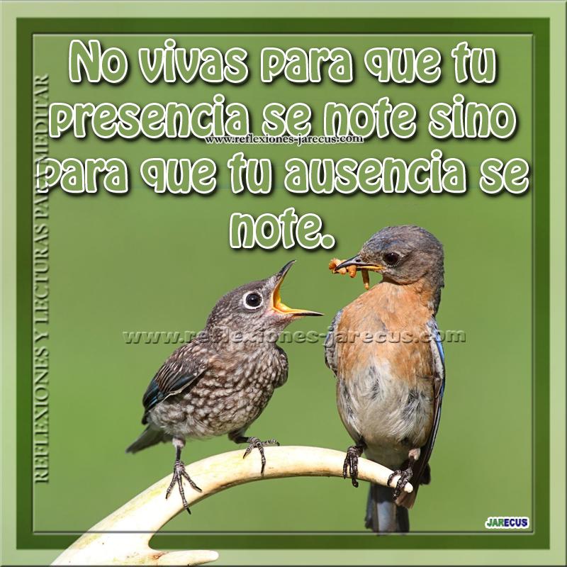 ausencia, presencia, aves