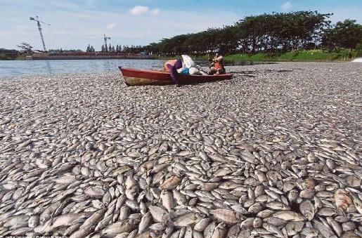 Tasik Citra bau busuk akibat ribuan bangkai ikan