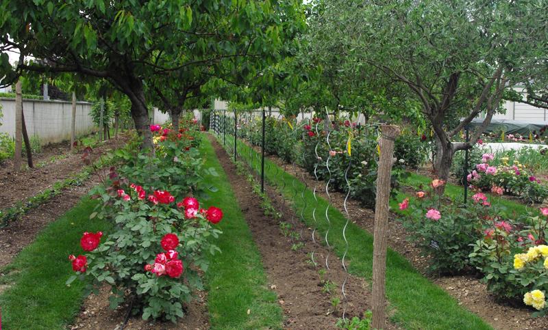 Nastiya le jardin des roses saint yrieix rendez vous for Jardin permaculture 2015
