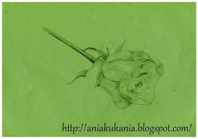 róża Rysowane ołówkiem