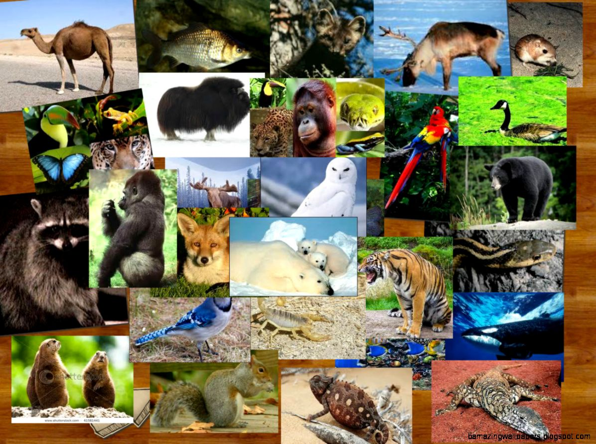 Animals around the world  Publish with Glogster