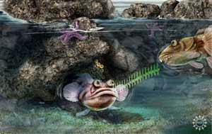 Ilustrasi Gambar Ikan Midshipman