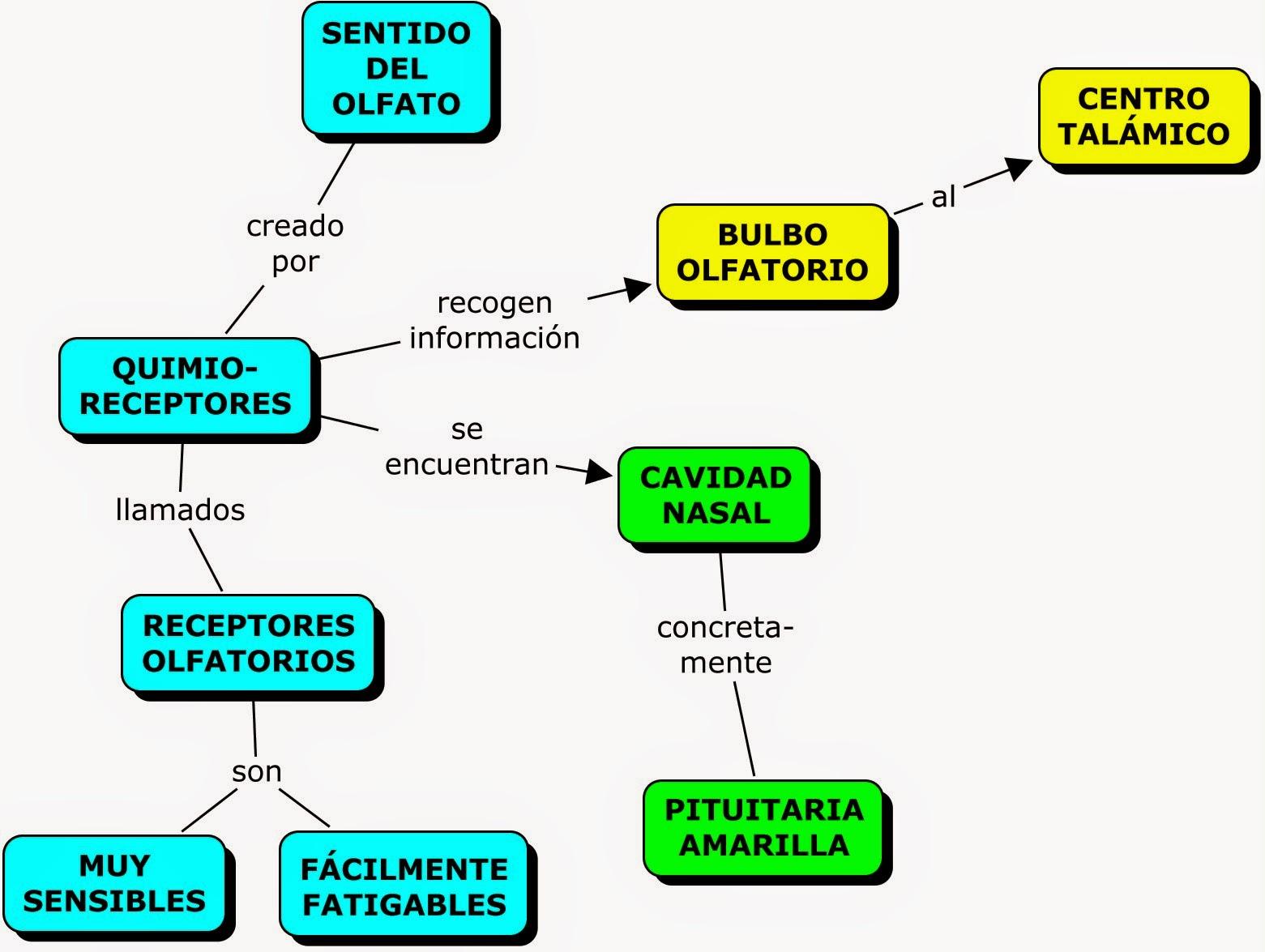 MAPAS CONCEPTUALES SOBRE LOS SENTIDOS | MAPAS CONCEPTUALES (MIND ...