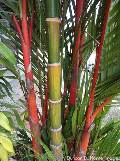 Bamboo Plants7