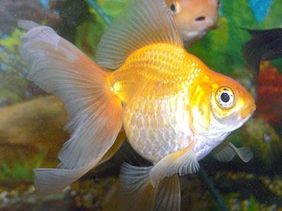 gambar ikan - gambar ikan