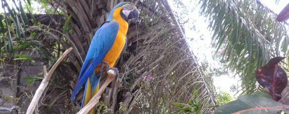 Bali Bird Park And Rimba Reptiles - Bali Zoo, Bali Bird Park, Reptile Park, Activities, Holidays, Tours, Attractions