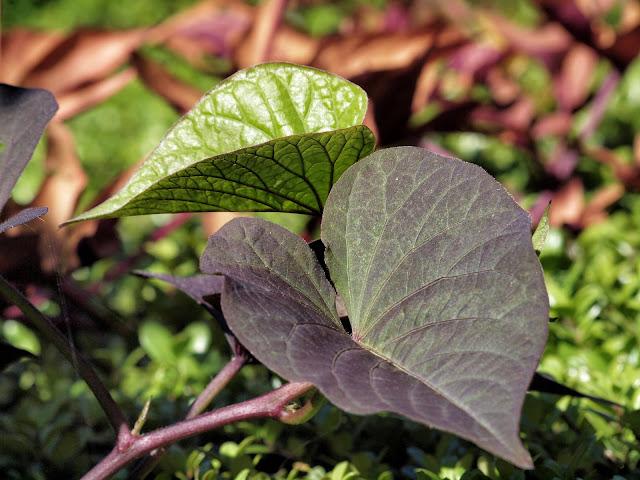 Leaf Textures, Conservatory Garden, Central Park