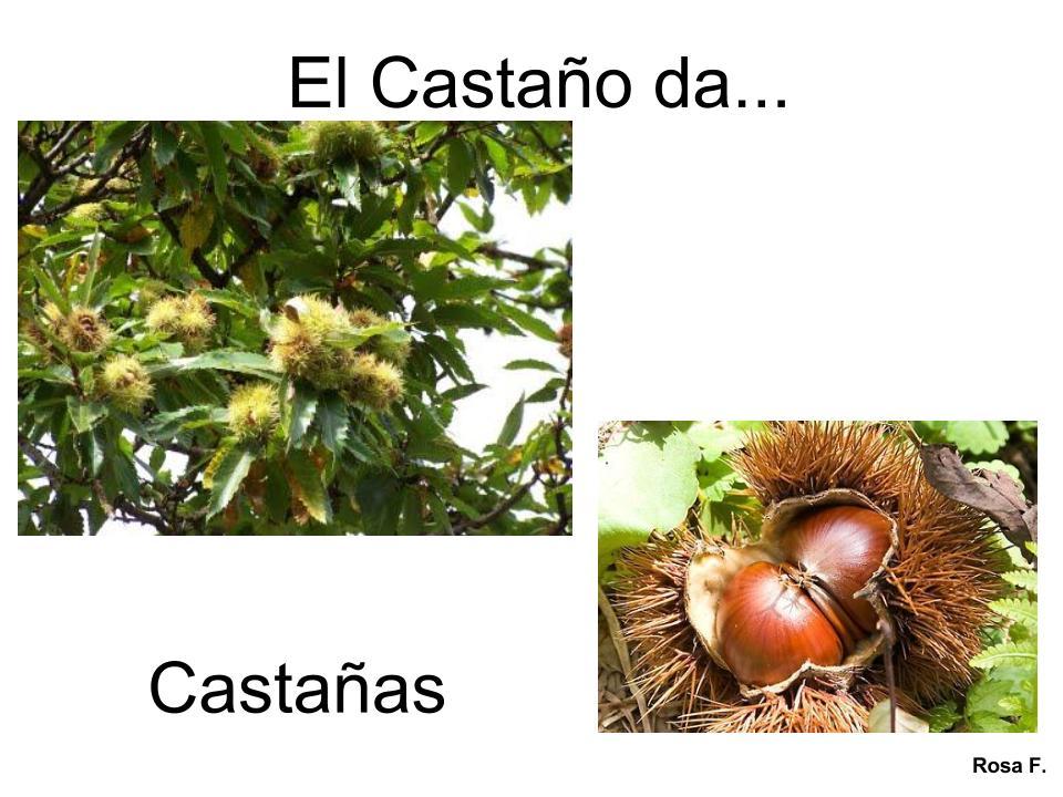 Maestra de infantil rboles frutales vocabulario en im genes for Plantas frutales