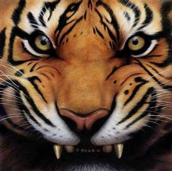 Animals - Angry Tiger Face Picture