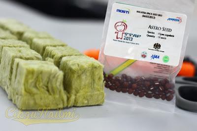 Biji benih kacang Azuki dan rockwool block untuk MASS 2013