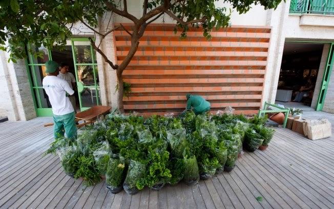 jardim vertical tijolo:JARDIM VERTICAL: leve o verde para dentro de casa