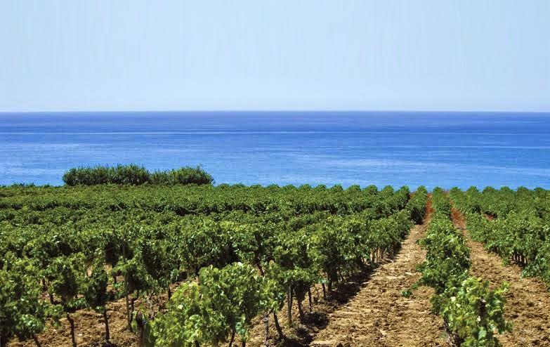 cantine settesoli, la più grande azienda vitivinicola siciliana, il più grande vigneto d'europa!