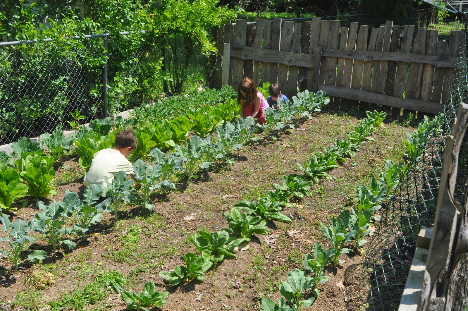 Thoroughly blessed olivia 39 s winter term 2015 - Weeding garden make work easier ...