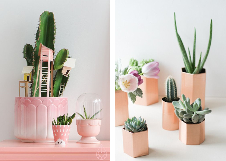 25 ideas de decoraci n con cactus y suculentas plantas for Cactus decoracion