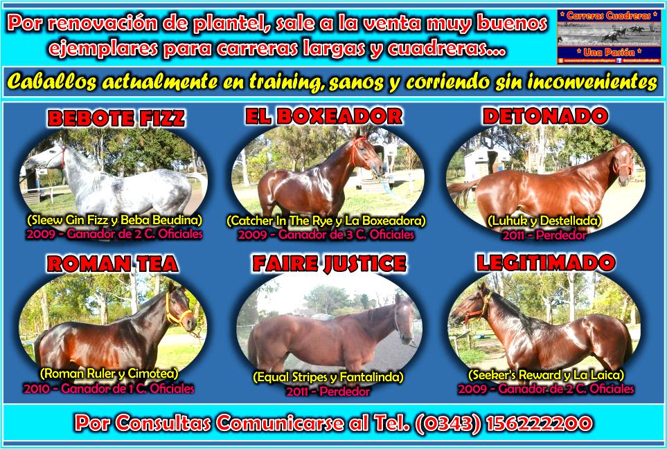 VENTA DE CABALLOS - 06.07.2015