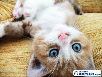 cutest cat anak kucing comel