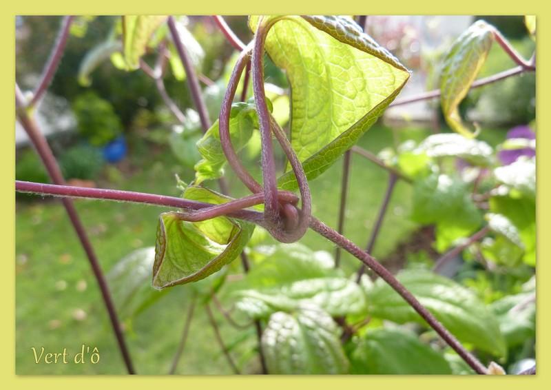 Vert d 39 cl matite ville de lyon - Jardin champetre rustique lyon ...