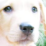 Mi dog Buddy Allen