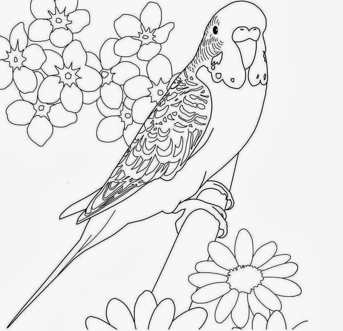 Parrot Coloring Drawing Free wallpaper