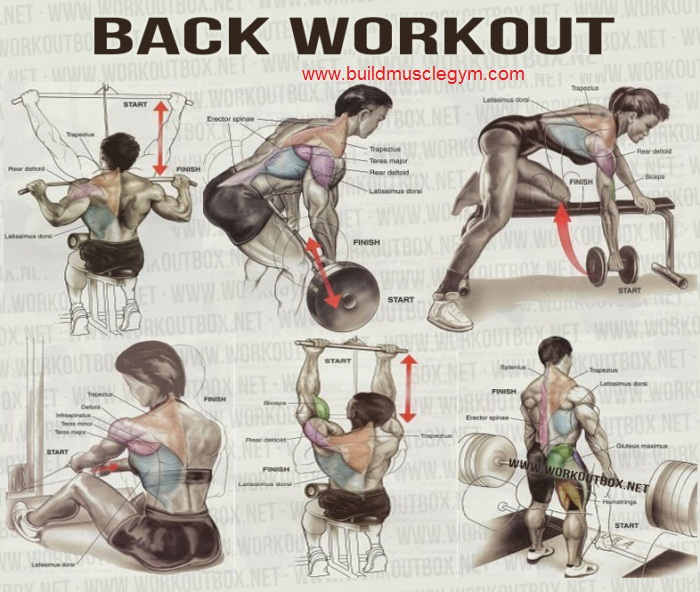 In your workout: Do bent-over rows toward the start of your back workout for heavy sets in lower rep ranges, about or The Smith version is a suitable substitute; it locks you in the vertical plane, but your body has to be in just the right position relative to the bar.