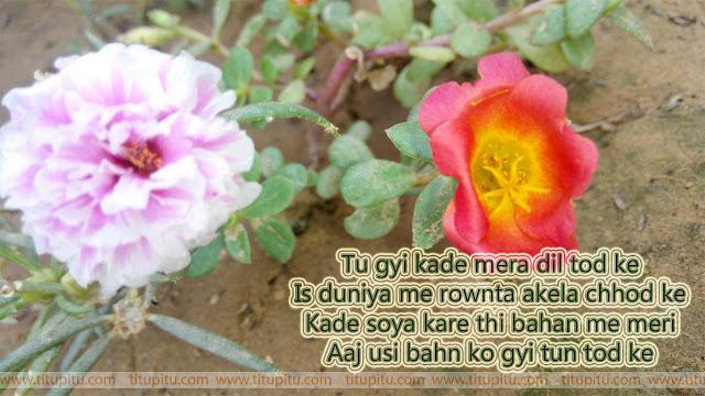 haryanvi-dard-bhari-shayari