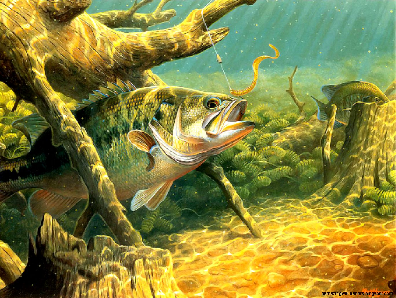 Largemouth bass fish wallpaper amazing wallpapers for Pictures of bass fish