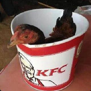 kfc ayam asli