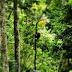 Tips Jelajah Taman Nasional Gunung Leuser