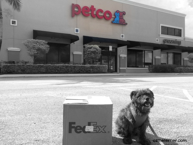 Oz the Terrier makes a donation of dog products to his local rescue through his local Petco store