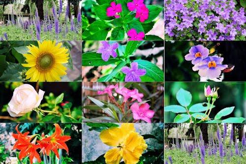 11 wallpapers de 1280x800px de resolución (flores)